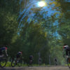 【Zwift】Londonに新コースLeith Hill登場!!!